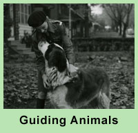 Guiding Animals